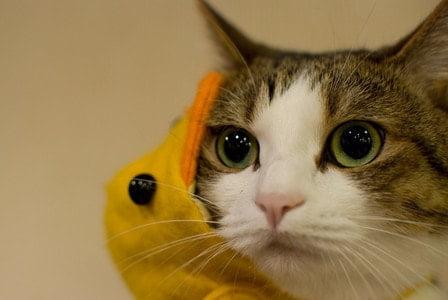 時給を聞いてショックを受ける猫