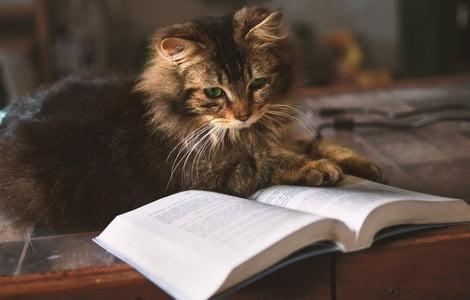 違いを勉強する猫